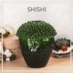 Декор від SHISHI - естетика та витонченість у кожній лінії!