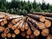 Українською універсальною біржею 15 травня 2018 року успішно проведено аукціон з продажу необробленої деревини