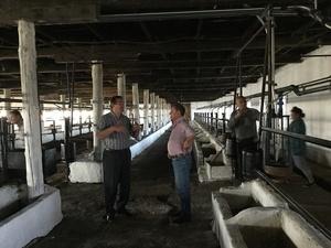 Доильные залы,  молокопроводы,  вакуумопроводы для крупного рогатого скота