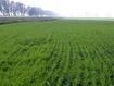 Олександр Мигловець: «Саме час подбати про захист зернових культур»