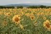 Засоби захисту рослин стали більш доступними для українських аграріїв