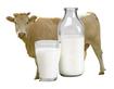 Експерт ділиться рецептом, як черкаським селянам заробити на молоці