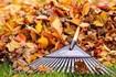 Степанецька ОТГ стимулює людей компостувати листя,  а не палити