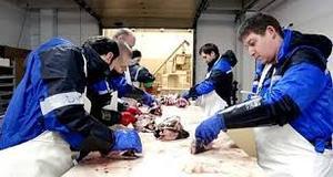 Работа на производстве по переработке рыбной продукции