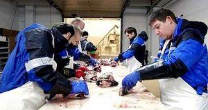 Работа на рыбном заводе в Норвегии l